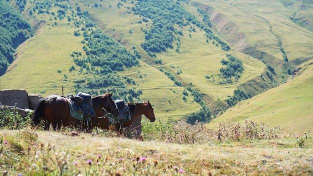 Zwei pferde, die auf bergumgebung weiden. schöner naturhintergrund