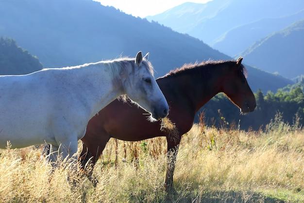 Zwei pferde grasen im morgengrauen in den bergen