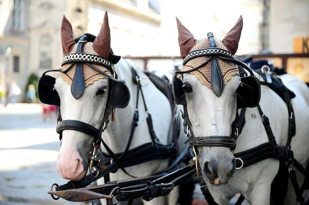 Zwei pferde. wagen für fahrende touristen