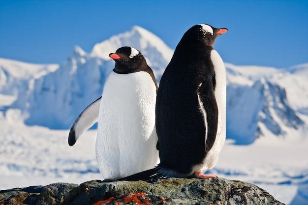 Zwei pinguine träumen