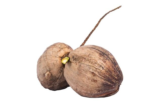 Zwei rohe kokosnüsse