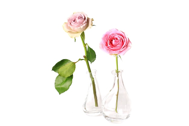 Zwei rosen in einer glasvase auf weißem hintergrund