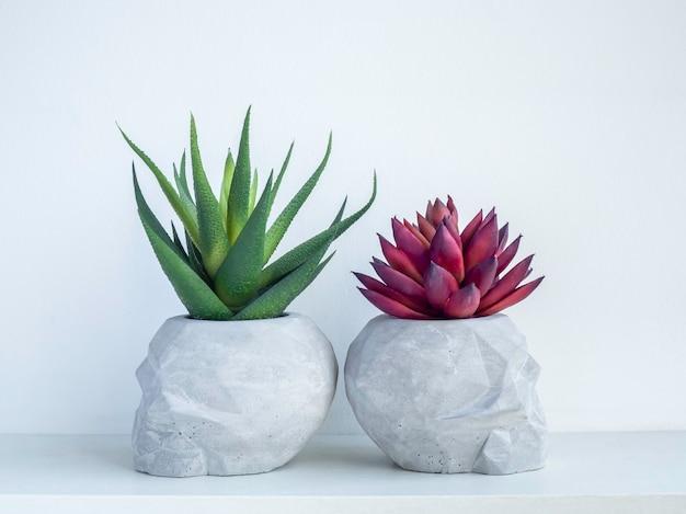 Zwei schädelförmige betonpflanzentöpfe mit roten und grünen sukkulenten auf weißem holzregal einzeln auf weißer wand mit kopierraum. kleine moderne diy-zementpflanzer trendige dekoration.