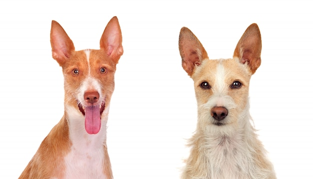 Zwei schöne hunde