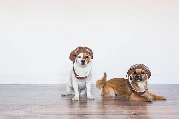 Zwei schöne niedliche kleine hunde, die lustigen pilotenhelm tragen. fliegerhut. innen. weißer hintergrund. reisekonzept