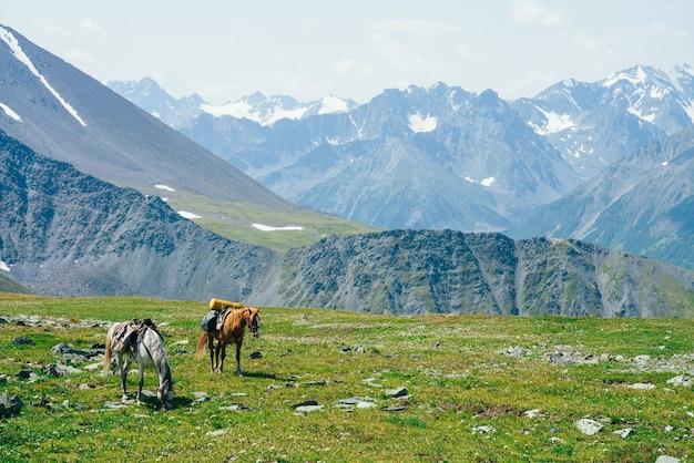 Zwei schöne pferde grasen auf grüner almwiese zwischen großen schneebedeckten bergen. wunderbare landschaftliche landschaft der hochlandnatur mit pferden. lebendige berglandschaft mit packpferden und riesigen gletschern.