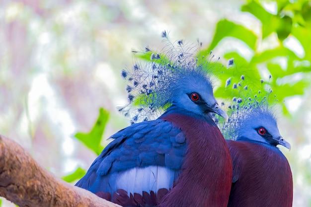 Zwei schöne vögel fingen an einem baum im natürlichen wald.