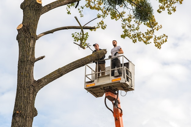 Zwei servicemitarbeiter schneiden große äste mit kettensäge von der kranplattform des hochstuhls ab. abholzung und gartenbau-konzept.