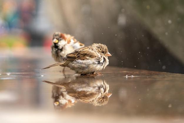 Zwei spatzen sitzen am brunnen zwischen dem wasserstrahl