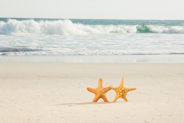 Zwei starfish gehalten auf sand