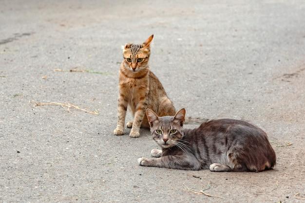Zwei streunende katzen auf der straße