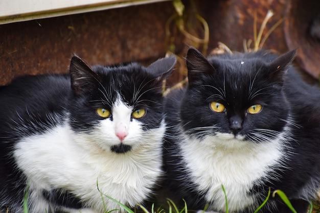 Zwei streunende katzen. schwarze elende katzen.