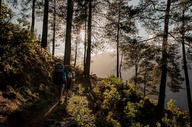 Zwei touristen mit rucksäcken im wald wandern