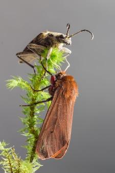Zwei verschiedene insekten sitzen auf pflanze