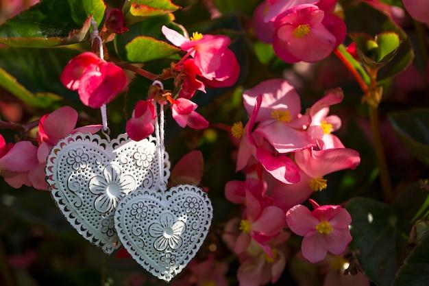 Zwei weiße herzen hängen im schatten rosa blumen - ein hintergrund über liebe, romantik, hochzeit