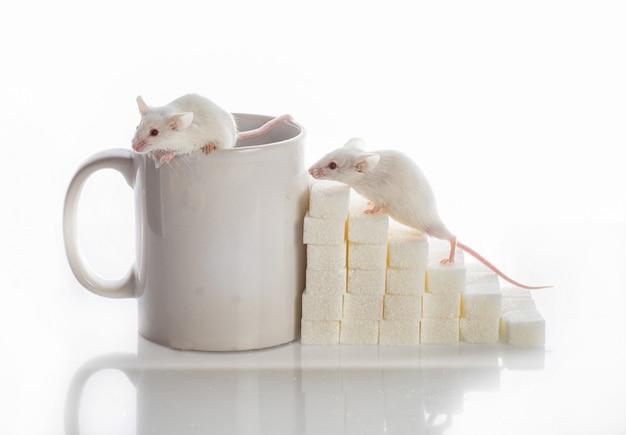 Zwei weiße mäuse, die von den zuckerwürfeln und einer tasse die treppe hinaufkriechen