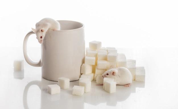 Zwei weiße mäuse kriechen die treppe von den zuckerwürfeln und einer tasse hoch, diabetes-konzept