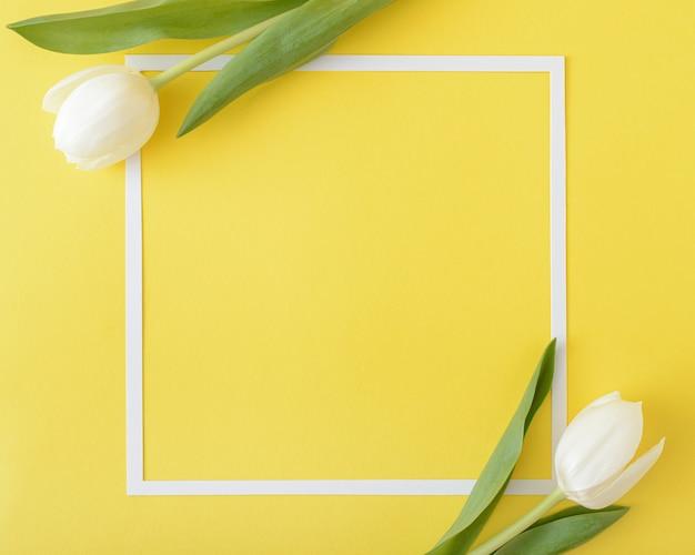 Zwei weiße tulpenblumen auf gelbem hintergrund mit weißem rahmen. großer kopierraum. optimistisches frühlingskonzept. minimaler stil. flache lage .frame.