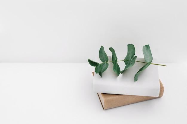 Zweig auf zwei bücher gegen weißen hintergrund