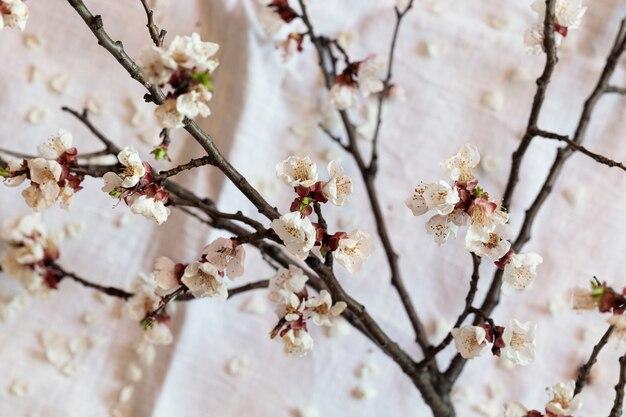 Zweig blühende aprikose über tabelle