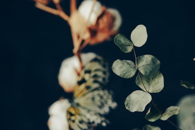 Zweig der baumwollpflanze