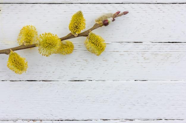 Zweig der blühenden weide auf weißem hölzernem hintergrund mit kopienraum, frühling ostern-konzept