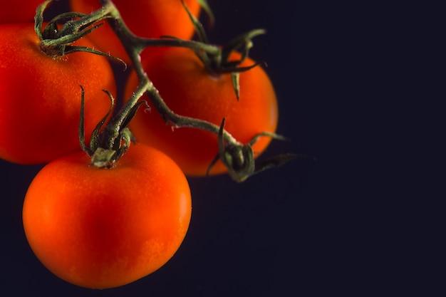 Zweig der frischen roten tomaten isoliert