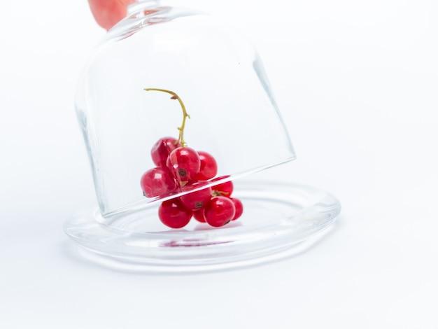 Zweig der roten johannisbeere in einer glasplatte unter einer glasabdeckung.