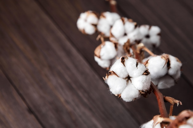 Zweig der weißen baumwollblumen auf braunem hölzernem hintergrund
