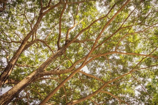 Zweig des großen baumes