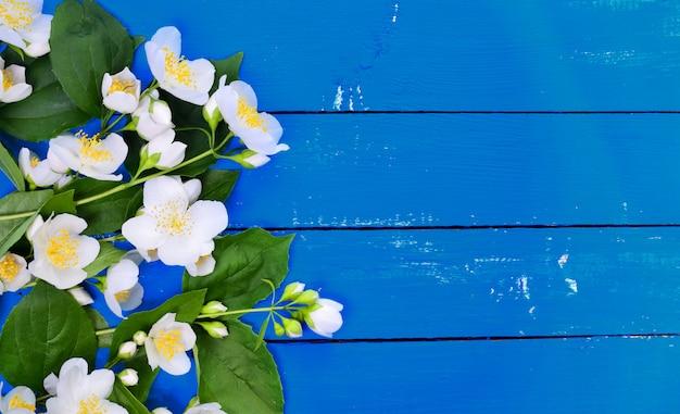 Zweig des jasmins mit weißen blumen und grünen blättern