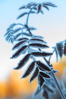 Zweig eines mit raureif bedeckten baumes gegen den blauen himmel am frühen morgen