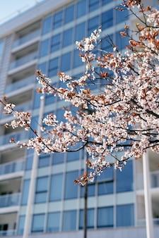 Zweig eines obstbaums, der mit rosa blüten mit blättern blüht