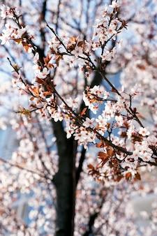 Zweig eines obstbaums, der mit rosa blüten mit blättern in nahaufnahme blüht