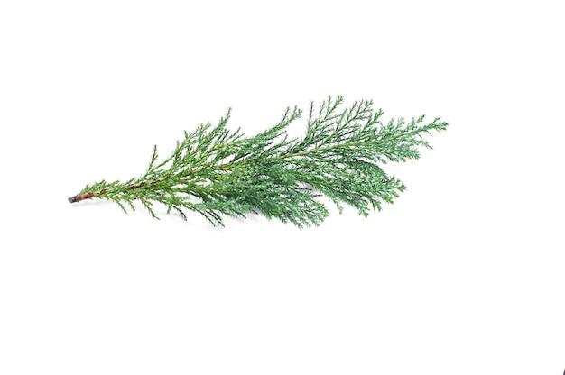 Zweig eines weihnachtsbaumes auf einem weißen hintergrund