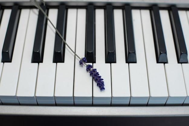 Zweig frischer lavendel auf den klaviertasten