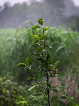Zweig mit blatt unter regen.