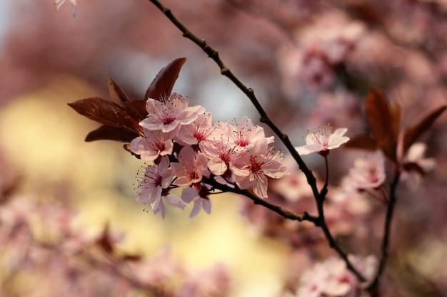 Zweig mit blüten