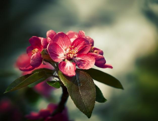 Zweig mit frühlingsblumenblüten