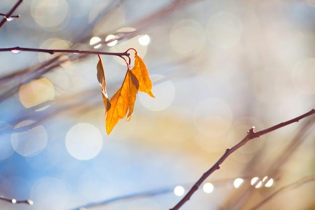Zweig mit herbstorangenblättern auf hellem hintergrund bei sonnigem wetter