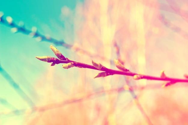 Zweig mit knospen