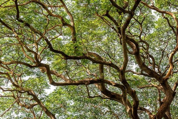 Zweig und grünes blatt