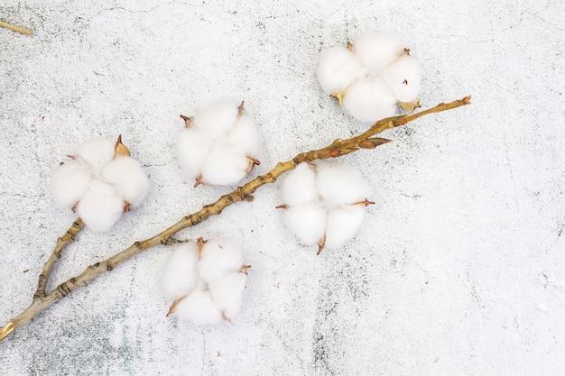 Zweig von baumwolle auf einer weißen konkreten hintergrundnahaufnahme.