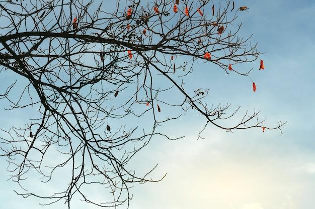 Zweige auf hintergrund verzweigen. die zweige und zweige sind orange.