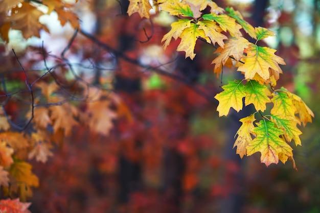 Zweige der herbstbäume auf einem unscharfen hintergrund mit exemplarplatz