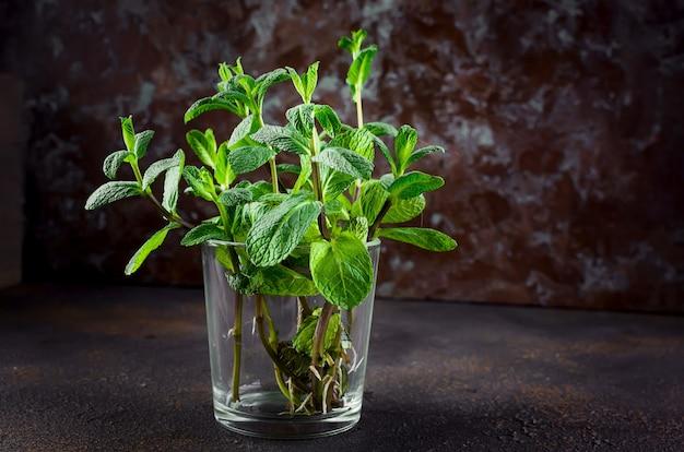 Zweige der jungen minze in einem glas auf darkon