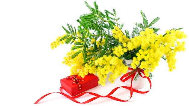 Zweige der mimose und einer geschenkbox mit rotem band auf dem weißen hintergrund lokalisiert