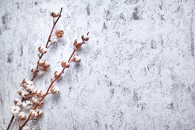 Zweige der weißen baumwollblumen, die auf einem hölzernen hintergrund mit kopienraum liegen. draufsicht