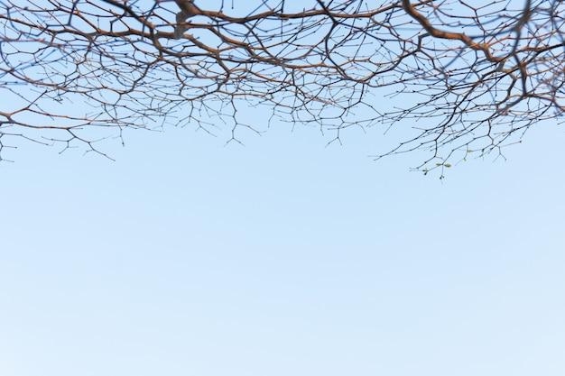 Zweige des baumes