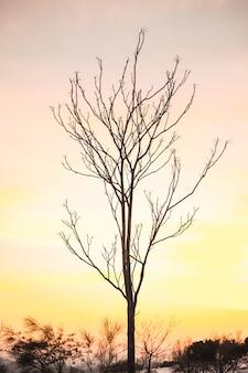 Zweige des dünnen blattlosen baumes gegen den bunten sonnenuntergangshimmel am winterabend in der landschaft